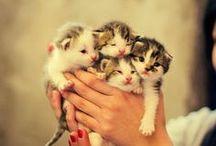 Daily kitty