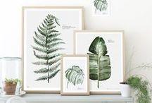 Foliage / Beautiful botanicals