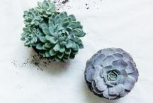 CACTI AND SUCCULENTS / by Kady Le