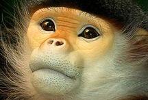 Monkey's / Apen