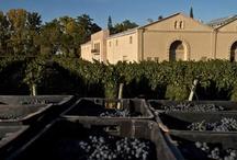 Casarena Winery: Mendoza Argentina