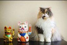 Maneki Neko / Maneki Neko aka Lucky Cat from Japan