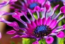 Vysněné květiny do zahrady