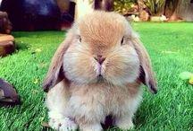 Rabbits / Nothin really...