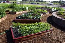 Garden Products / Our favorite landscape and gardening tools to improve plant health and quality.