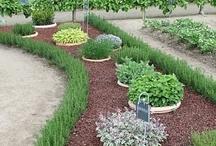 Planten, tuin, bloemen, ...