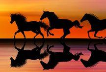 ________________Horses Caballos / by ◎ e s p ★ r i t k ◎