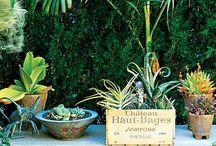 Plants, Gardens & Exteriors
