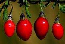 red - carmin - vermilion - burgundy / passion