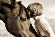 Mad about Horses / animals / by Karyn Meier