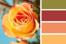 Color My World / Color Inspirations / by Christine Rothenbush