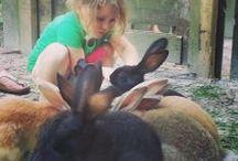 Dieren op Wedderbergen / Houd jij van dieren? Kom dan eens op vakantie bij ons en geniet  van onze kippen of knuffel een konijn.