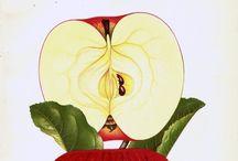 Botanical & Scientific illustration / by Reza Salarifar