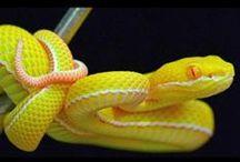 Naturally Yellow