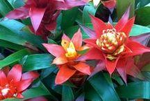 Bromeliads + Airplants