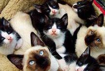 ♡ I So Love You Kittie Cats ♡