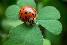 ❃ Tiny, Fabulous Lady Bugs ❦