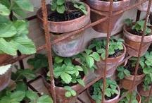 The pot garden