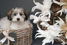 1 Doggies - Puppy's