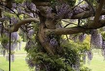 17 Trees - Bomen