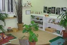 Organisation and classroom environment
