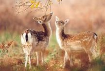 Cute animals / animals / by Diana