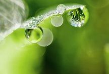 Dew Drops / by Diana