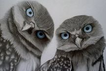 17 Owl - Uilen