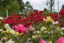 Our Garden Center / Garden retail