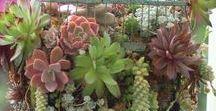 lil plant buddies