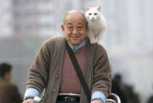 Edit Title / Cats and Dogs on bikes. / by Annabelle Muscatell
