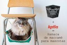 Juegos gatitos
