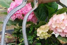 Garden and Backyard / Gardening ideas