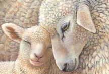 17 Shepherd - Schapen
