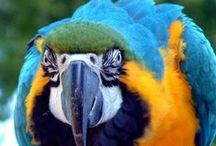 papousci / papoušci jsou krásná stvoření