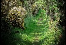 Into The Woods / Get lost in the beauty of nature, then get lost within yourself.  / by Phunky Lollypop