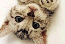 Animaux / Des petites bêtes et des petits animaux trooooop chou vous allez simplement craquer ! Bizouuu✨
