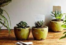 cactus et maison