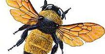 Картинки для творчества - цветы, бабочки, птицы, природные явления