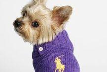 Abbigliamento per cagnolini