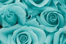 ♥ Turquoise
