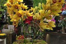 Ανθοσυνθέσεις, Φυτά - Ιδέες για δώρα & διακόσμηση / Εντυπωσιακές συνθέσεις με φρέσκα λουλούδια, ιδανικές για δώρα, την διακόσμηση του σπιτιού & του γραφείου από την Les Fleuristes. Impressive fresh flower creations by Les Fleuristes.