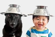 """All Things """"DOG"""" / Here are some of our favorite posts for 2015."""
