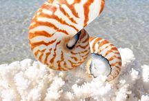 Nautilus Cesme / www.instagram.com/SemihErmer