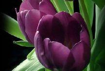 Flower Frenzy / Flowers, flower photos, beautiful flowers, beautiful blooms