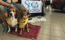 2016 FL Dog-Friendly Events