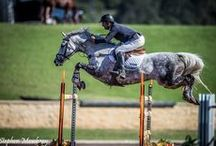 equestrian / by Mara Pineau