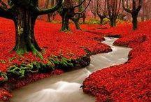 Fall around the world...
