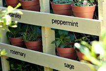Gardens/Garden Ideas
