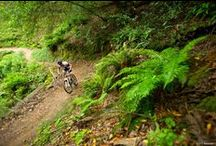 Places to Ride / Some of the best places in the world to ride are right here in Northern California!